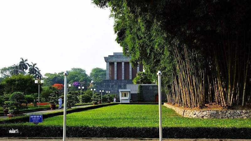 Vietnam national tree bamboo, there is a bamboo forest right next to Ho Chi Minh Mausoleum